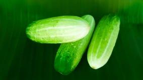 Pepino verde fresco en la hoja del plátano Imágenes de archivo libres de regalías