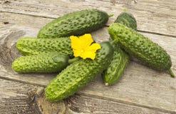 Pepinos com flor amarela Imagens de Stock Royalty Free