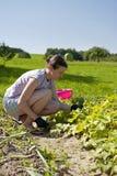 Pepinos de la cosecha de la mujer Fotos de archivo libres de regalías