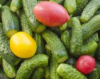 Pepinos de los tomates Imagenes de archivo
