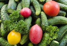 Pepinos de los tomates Foto de archivo libre de regalías