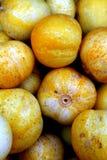 Pepinos do limão Foto de Stock Royalty Free