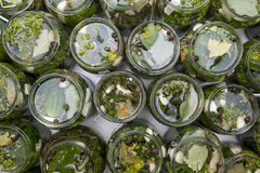 Pepinos en agua salada Imágenes de archivo libres de regalías