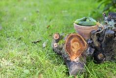 Pepinos frescos em uma cesta em uma grama Foto de Stock