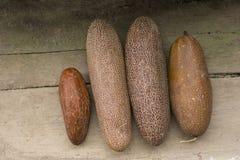 Pepinos maduros Fotos de Stock