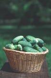 Pepinos na cesta de vime Fotos de Stock