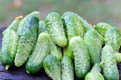 Pepinos orgánicos Imagen de archivo libre de regalías