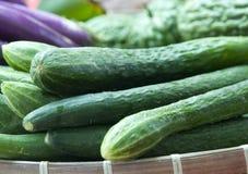 Pepinos orgânicos Fotos de Stock
