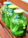 Pepinos pstos de conserva caseiros em um frasco de vidro Foto de Stock Royalty Free