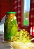 Pepinos salados hechos en casa Fotografía de archivo libre de regalías
