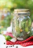 Pepinos salados hechos en casa en el tarro de cristal Fotografía de archivo libre de regalías