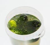 Pepinos salgados, salgados Imagem de Stock