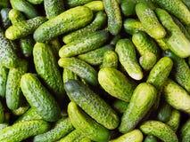 Pepinos verdes Fotografia de Stock Royalty Free