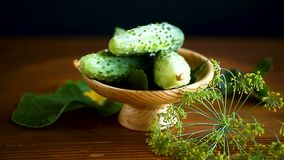Pepinos verdes frescos almacen de video