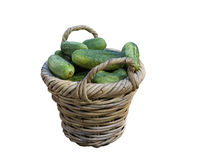 Pepinos verdes na cesta Fotos de Stock