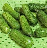 Pepinos verdes pequenos Fotografia de Stock