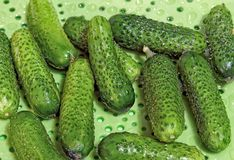Pepinos verdes pequenos Imagens de Stock Royalty Free