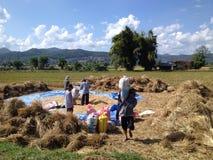 Pepiple nelle risaie Immagini Stock Libere da Diritti