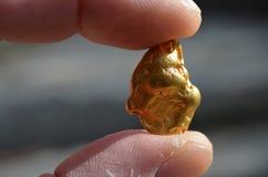 Pepita de ouro das jazidas de ouro de Austrália Fotografia de Stock