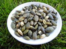 Pepita Seeds macra en hierba verde Foto de archivo