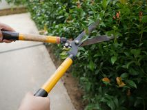 Peple worker cut tree royalty free stock images