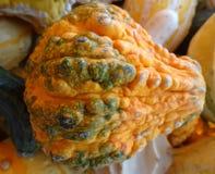Pepo Cucurbita, бородавчатая тыква груши Стоковая Фотография
