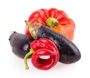 Peppar aubergine, varma peppar Arkivbild