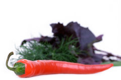 peppar för basilikachilidill arkivfoton