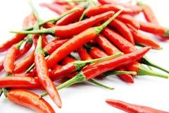 Peppar för röd chili Royaltyfria Foton