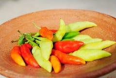Peppar för röd chili Fotografering för Bildbyråer