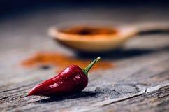 Peppar för röd chili som är kryddiga på en träsked Grönsak på ett mörker, trätabell Begrepp av varm mat Fotografering för Bildbyråer