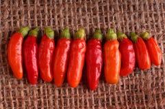 Peppar för varm chili i linje Royaltyfria Bilder