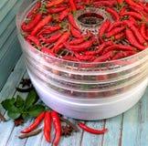 Peppar och andra grönsaker i tork royaltyfria foton