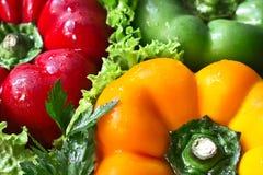 Peppar och grönsallat Arkivfoton