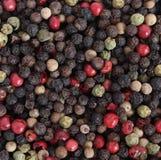 Peppar och pepparkorn Royaltyfria Bilder