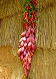 Peppar och sötpotatisar som hänger på gräsväggen Royaltyfri Foto