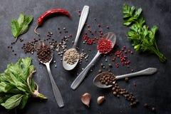 Peppar och saltar krydda-, mintkaramell- och persiljaörter royaltyfri bild