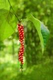 Peppar på trädet royaltyfri fotografi