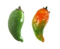 peppar som ripening Royaltyfria Bilder
