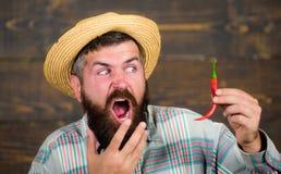 Pepparskördbegrepp Den lantliga bonden i sugrörhatt gillar kryddig smak Håll för bonde för skörd för manhållpeppar skäggig arkivfoton