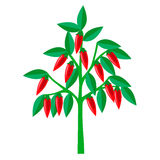 Pepparträd också vektor för coreldrawillustration Fotografering för Bildbyråer