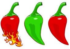 Pepper. Illustration of hot pepper for design Stock Photography