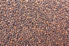 Pepper. A texture made of whole black pepper seeds Royalty Free Stock Photo
