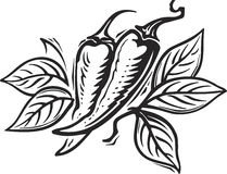Pepper. Engrawing picture. Vector illustration Royalty Free Stock Images