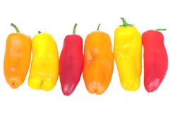 Pepper. Red yellow and orange peppers in row  isolated on white Royalty Free Stock Photo