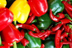Free Pepper Royalty Free Stock Photography - 975577