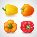 Pepper bell vegetable. Realistic vector icon set Stock Photos