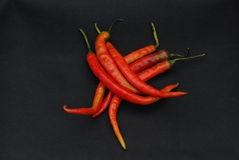 Pepper. On a black background Stock Photography