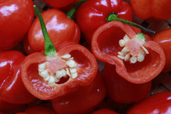 Pepper Royalty Free Stock Photography