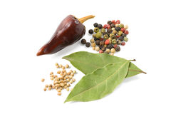 Pepper, coriander and laurel. Various kinds of spices isolated on white background royalty free stock image